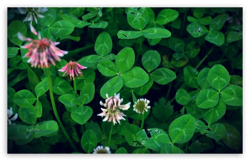 can_you_find_a_four_leaf_clover-t2